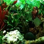fish tank picture - Just a general pic of the 55 gallon freshwater community tank.