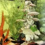 fish tank picture - Clowns tower! clowns unfortunately are camera shy