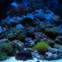 fish tank picture - 27 gallon reef