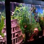 fish tank picture - left angle view