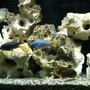 fish tank picture - Trio 2