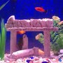 fish tank picture - Just a close up. I got camera happy after adding fish.