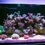 fish tank picture - 2 of 4