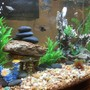 fish tank picture - Angle 2