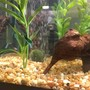 fish tank picture - Iron Wood, Plants and Small Airstone