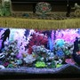 fish tank picture - Tank pic 2