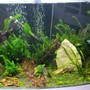 fish tank picture - 2nd pic Added the carpeting plants.