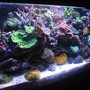 fish tank picture - 55 gallon reef tank