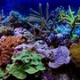 fish tank picture - My reef tank picture with a Nikon D70