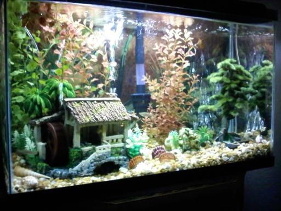 Tarr1 39 s additional tank picture photo id 32042 full for Aquarium decoration rocks