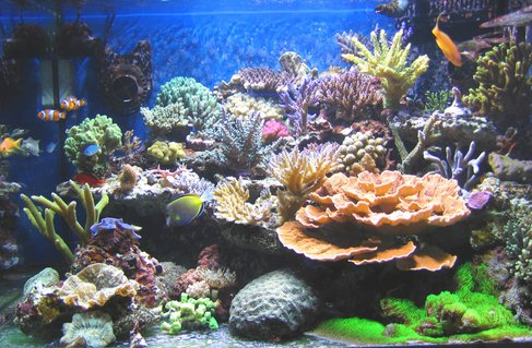Rated #6: 100 Gallons Reef Tank - After 6 months..