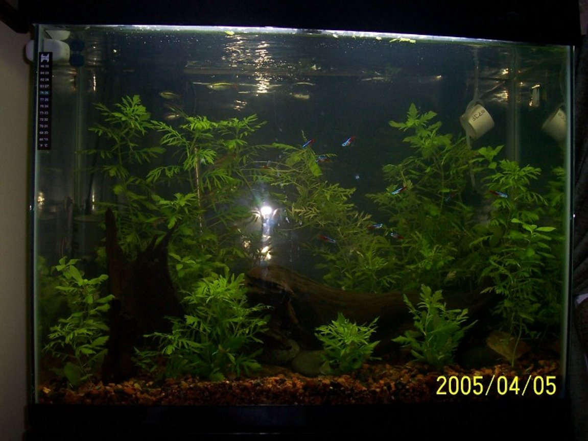 planted tank (mostly live plants and fish) - Updated tank April 2005