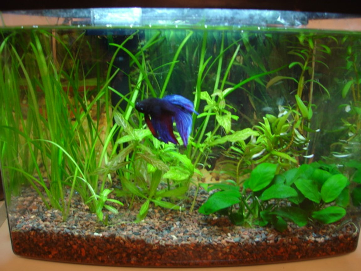 planted tank (mostly live plants and fish) - 3 gallon planted