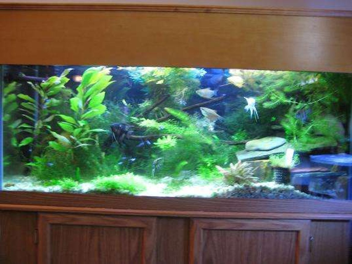30 gallons planted tank (mostly live plants and fish) - 75