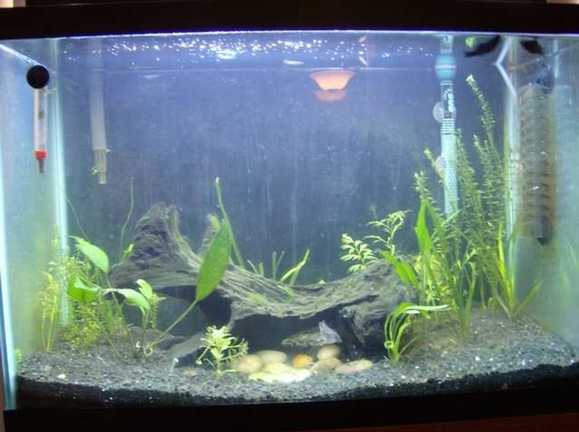 20 gallons planted tank (mostly live plants and fish) - My main 20 gallon tank