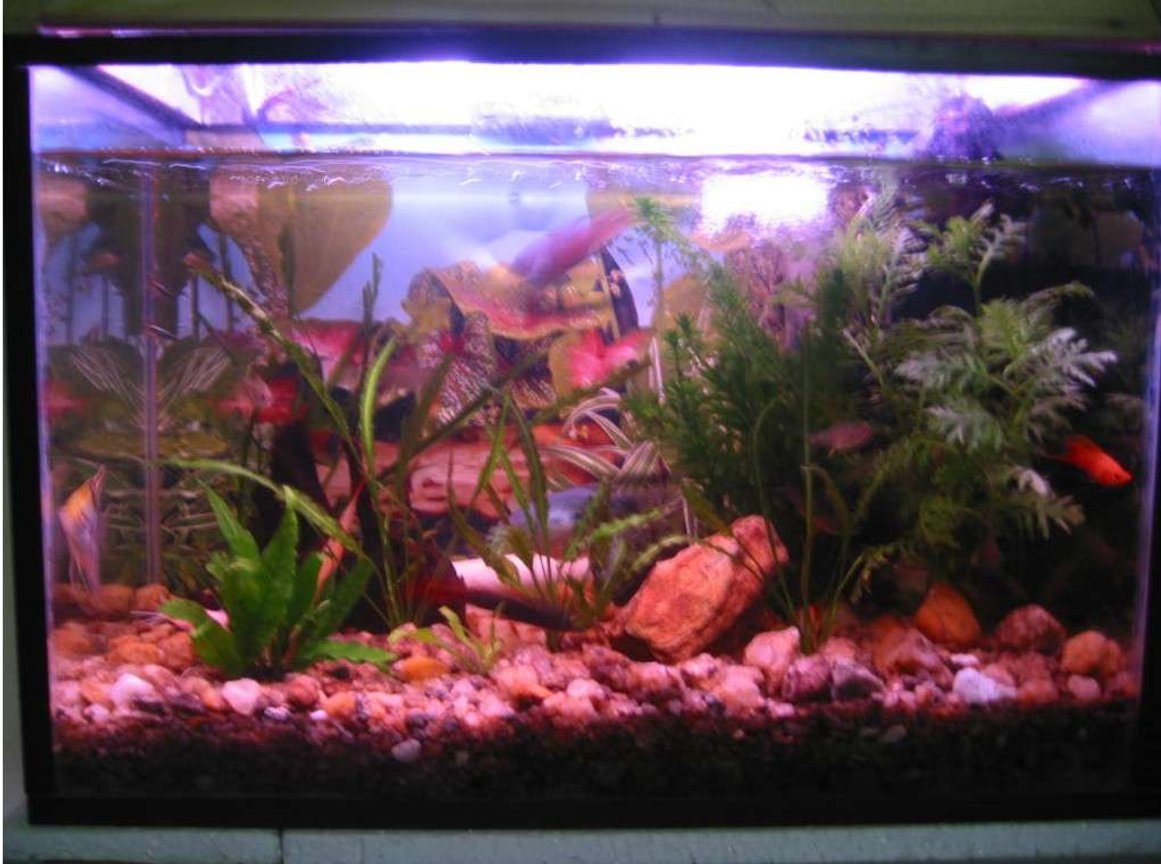 21 gallons planted tank (mostly live plants and fish) - same tank. the tank in image1 with a little more plants and stuff