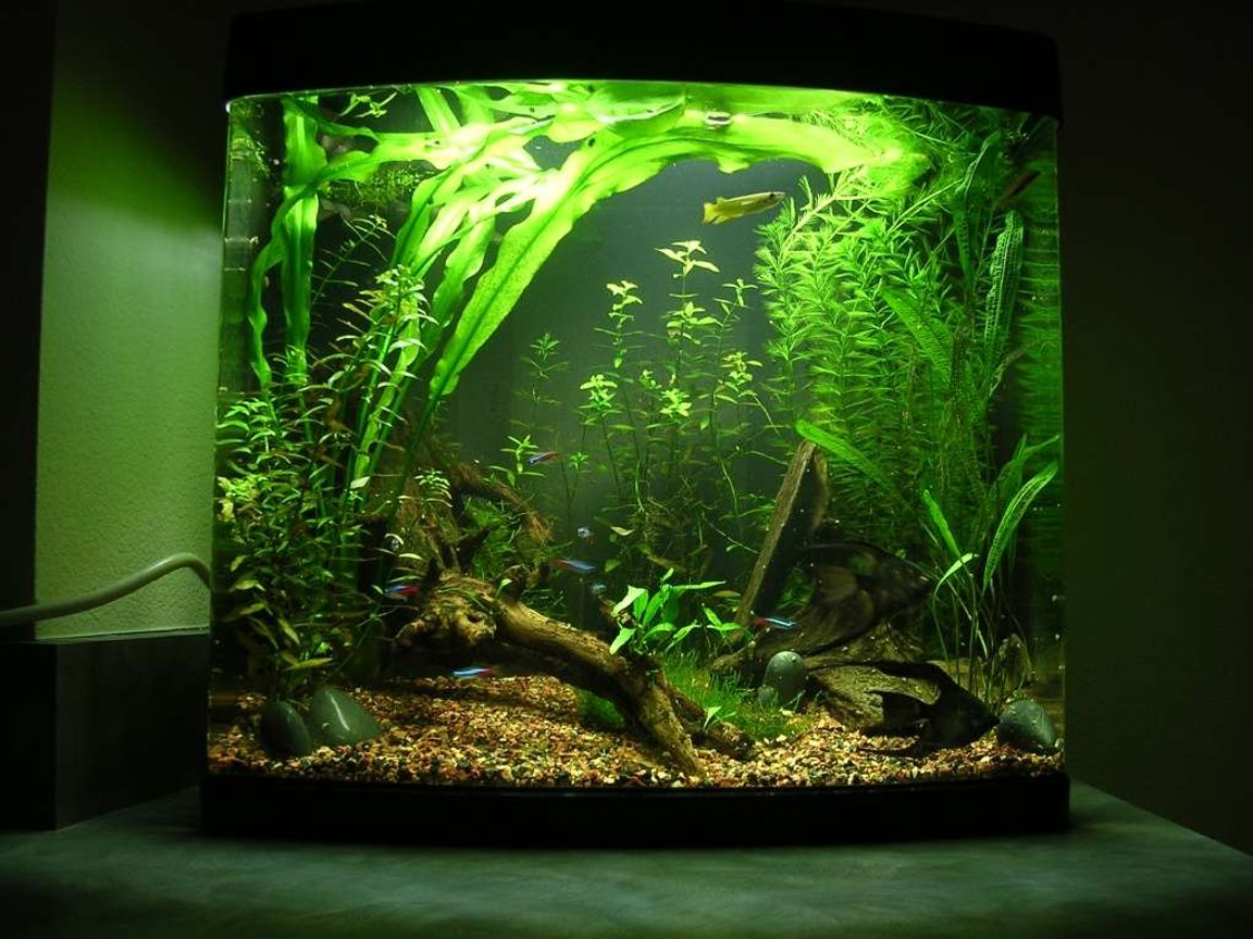 24 gallons planted tank (mostly live plants and fish) - This is my first planted tank, that i've been slowly working on for just over 6 months. The windelov's fern grows so fast and so big i'm just letting it float until i decide what to do with it. The first few months everything grew so slow i was disappointed but in the past few months everything grows so fast i'm overwhelmed. i've redesigned the tank half a dozen times trying to keep up with the plant growth as it continues to exceed my expecations.
