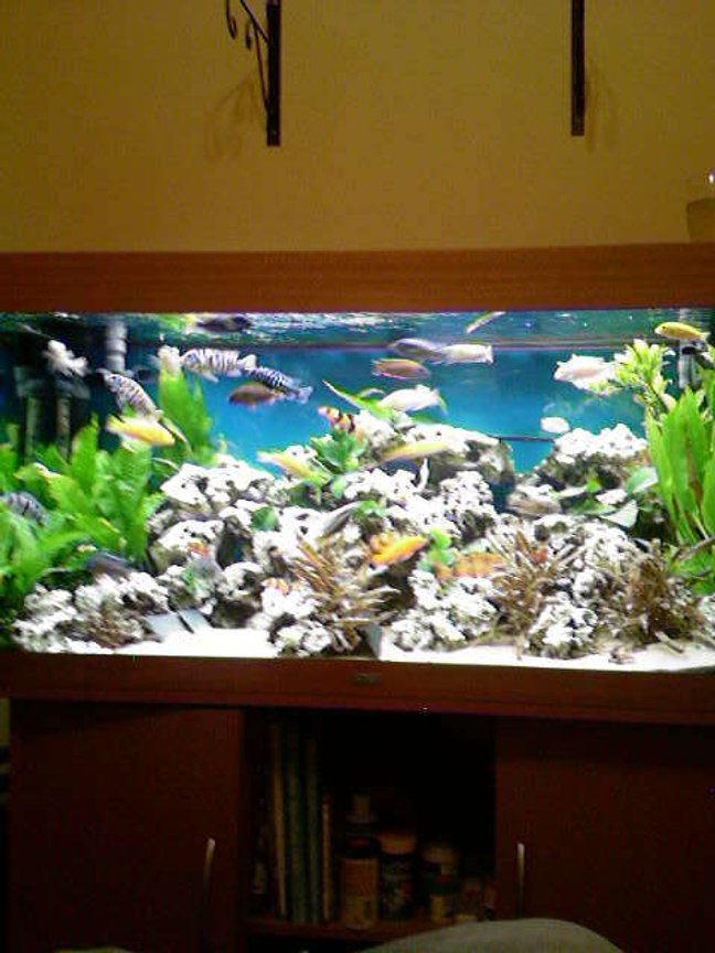 66 gallons planted tank (mostly live plants and fish) - full of plants nice and bright