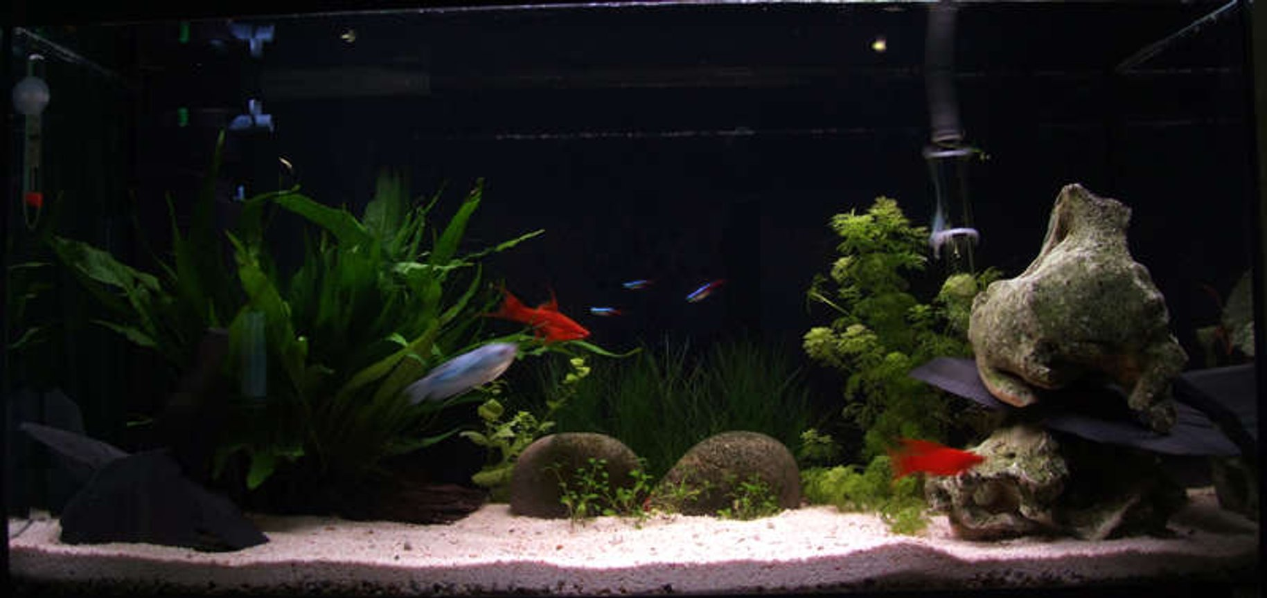 21 gallons planted tank (mostly live plants and fish) - 90l planted tank