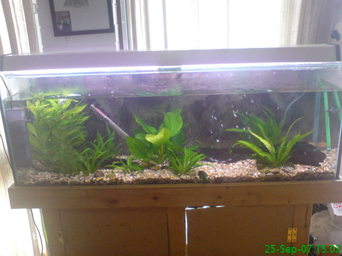 planted tank (mostly live plants and fish) - this is what my fish tank looks like now