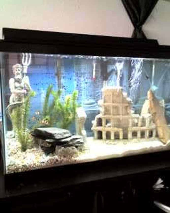 "30 gallons planted tank (mostly live plants and fish) - Our ""Greek"" Tank"
