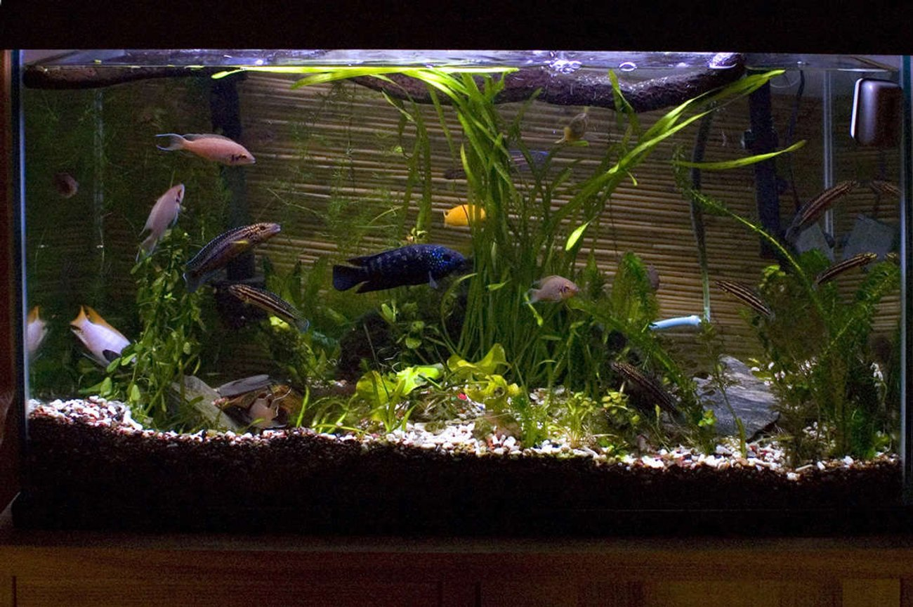29 gallons planted tank (mostly live plants and fish) - New caves and plants in a 29 gallon cichlid tank.