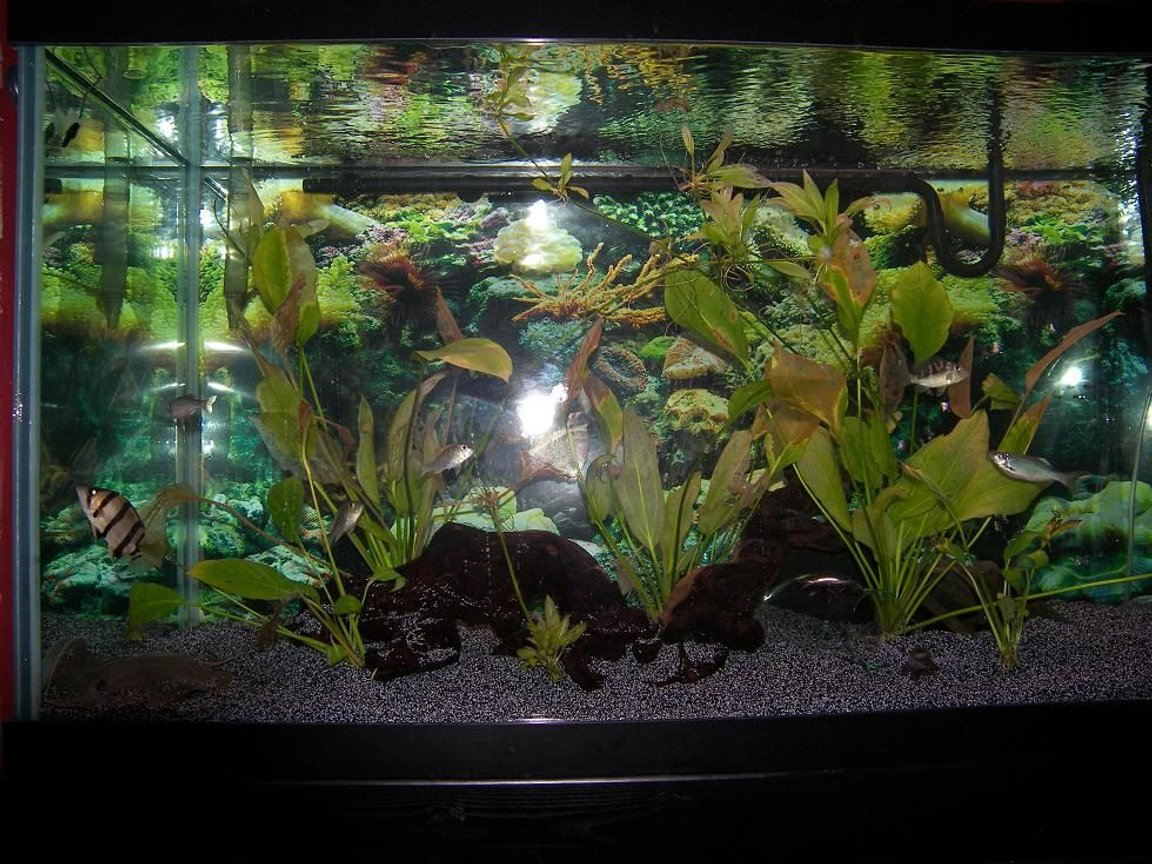 120 gallons planted tank (mostly live plants and fish) - Dat,Ray, few Plants.