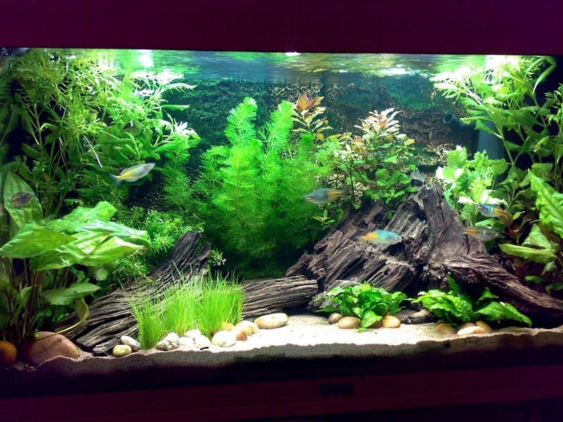 30 gallons planted tank (mostly live plants and fish) - Tank as of 26/11/07