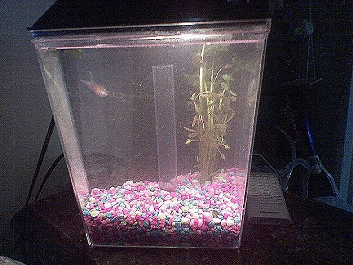 1 gallon planted tank (mostly live plants and fish) - '