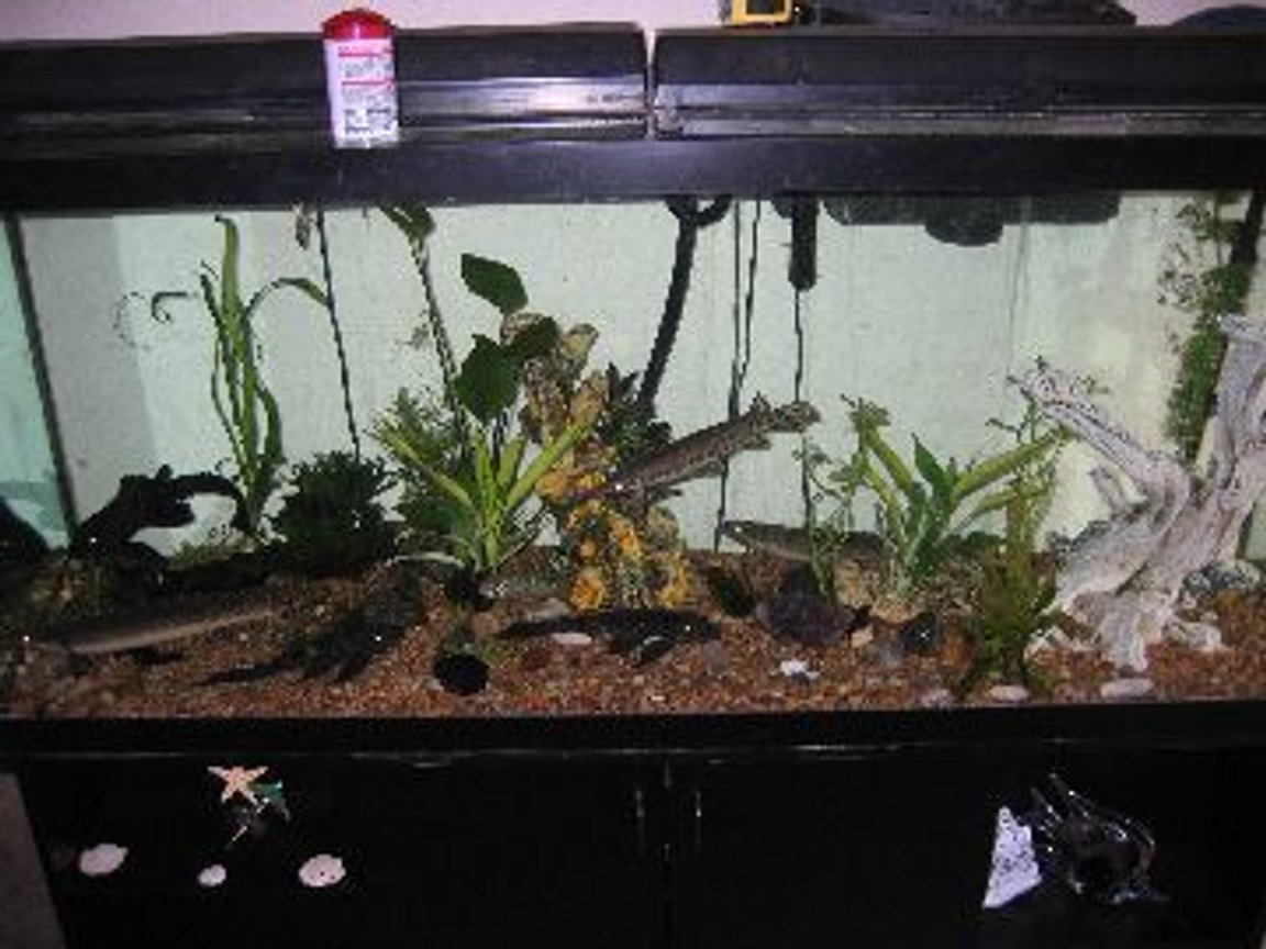 120 gallons planted tank (mostly live plants and fish) - 120 gallons with two 1000 cascade under the tank filters.