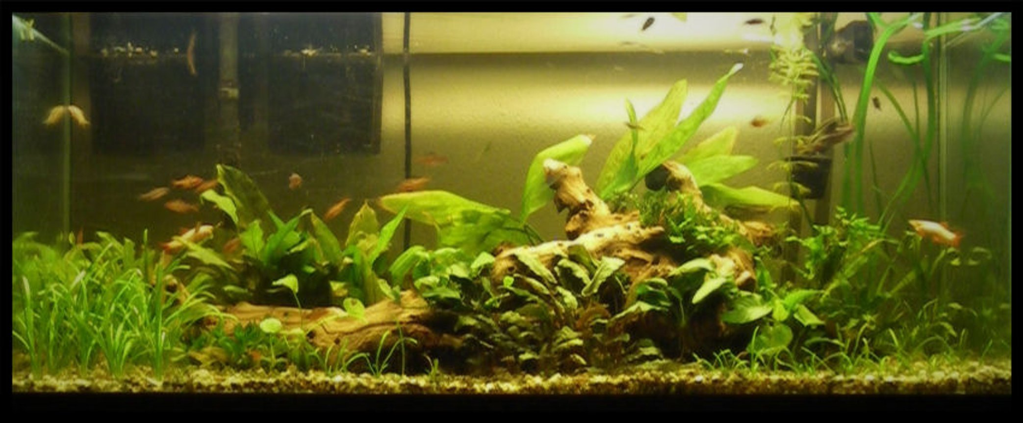 75 gallons planted tank (mostly live plants and fish) - 75g Planted. 30 species of plants and tons of fish.