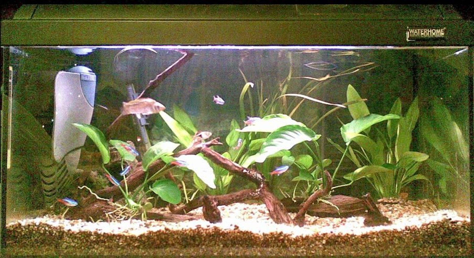 15 gallons planted tank (mostly live plants and fish) - my aqua with 2 extra anubias