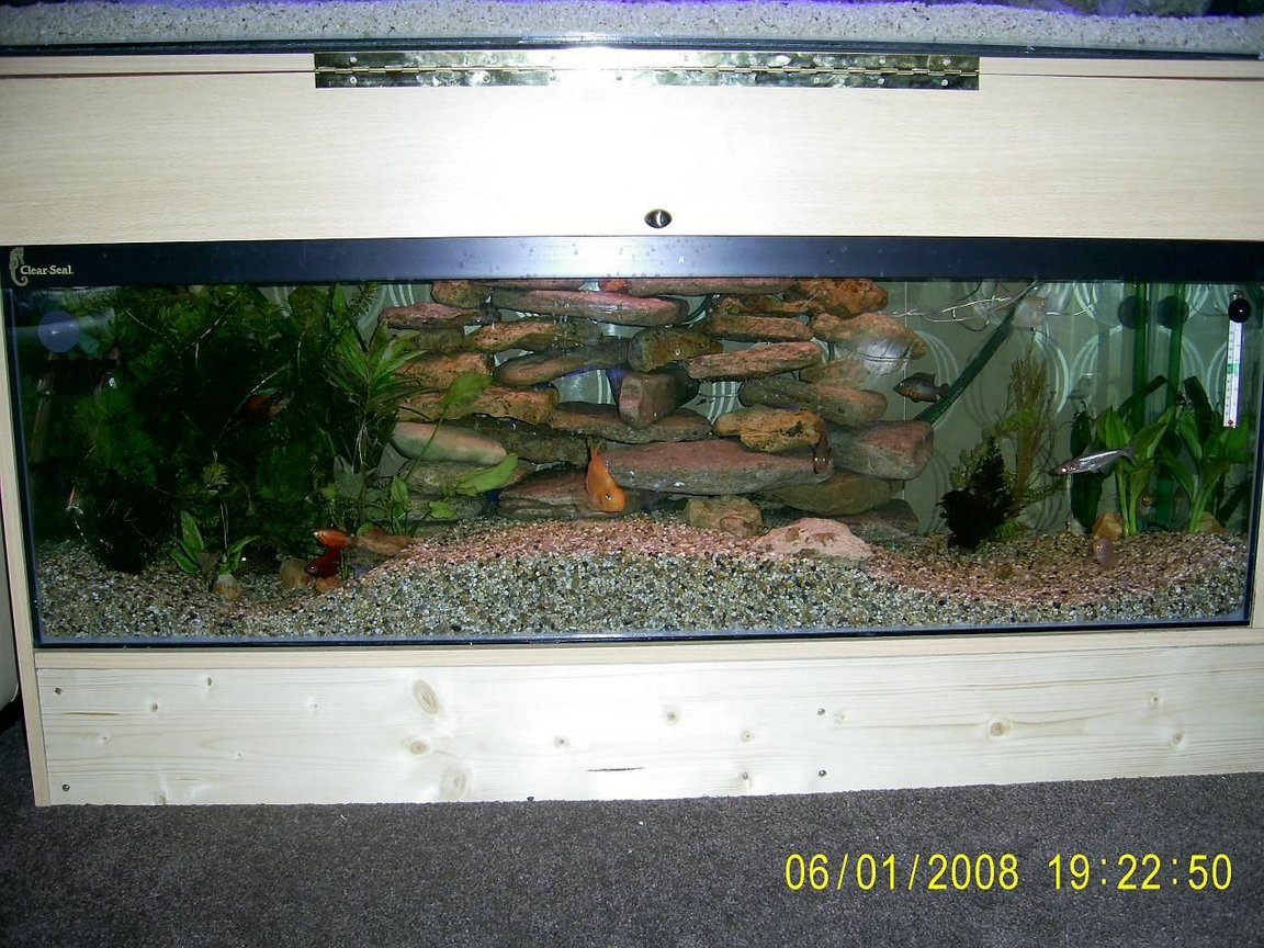 50 gallons planted tank (mostly live plants and fish) - This is our 4 foot x 15 inches x 15 inches it has taken about 2 years to get to this standard. We have arranged the gravel into a wave effect which gives us more options to make it more interesting for the 28 fish we currently have. The Centre raised section of gravel has a 2 inch plastic tube running through the middle of it which the fish love swimming through and the crab sometimes takes a walk through it. We have a mountian of rock at the back which the 8 shrimp and crab spend most there time hanging out on, the fish love swimming through this the crab climbs up this to get a breath of fresh air and chill. We have a couple of blue L.E.D light hidden at the back which look great when the big light goes of at night. The left side of our tank has got a heavily planted high and low level amount of plant life ( real ) which the fish love swimming in and hiding in. The right side we are waiting to get some Java moss and dwarf grass which will cover the right side of substrait, we have a few plants there. The centre section will remain gravel as the Plec likes hanging out here. This is my pride and joy.