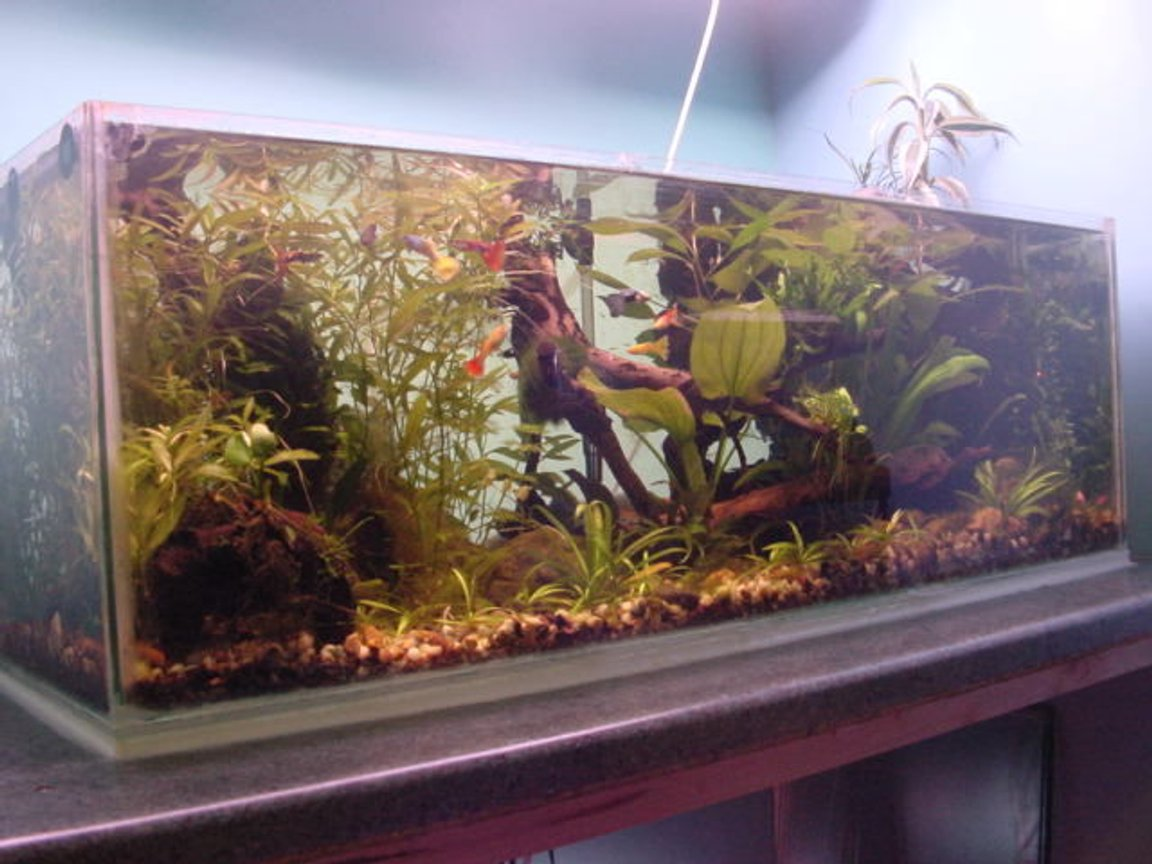 19 gallons planted tank (mostly live plants and fish) - the tank is 36x12x12. it has 2 30watt grolux tubes suspended from the ceiling. it has a fluval 2 plus filter with a small external filter