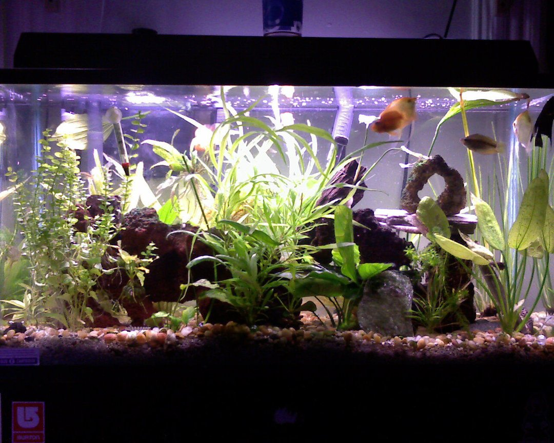 40 gallons planted tank (mostly live plants and fish) - THIS IS MY BABY