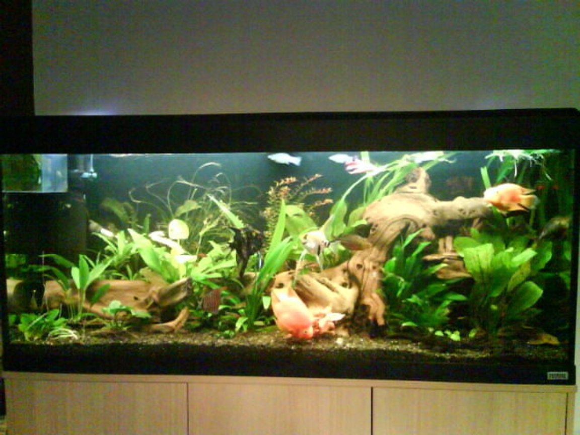 150 gallons planted tank (mostly live plants and fish) - my tank is a fluval roma 240 running on ro water 2 fliters on external 305 fluval and an internal 3plus. using planted substrate gravel . i add flertiser once a week and feed once a day. blood worm every other day.