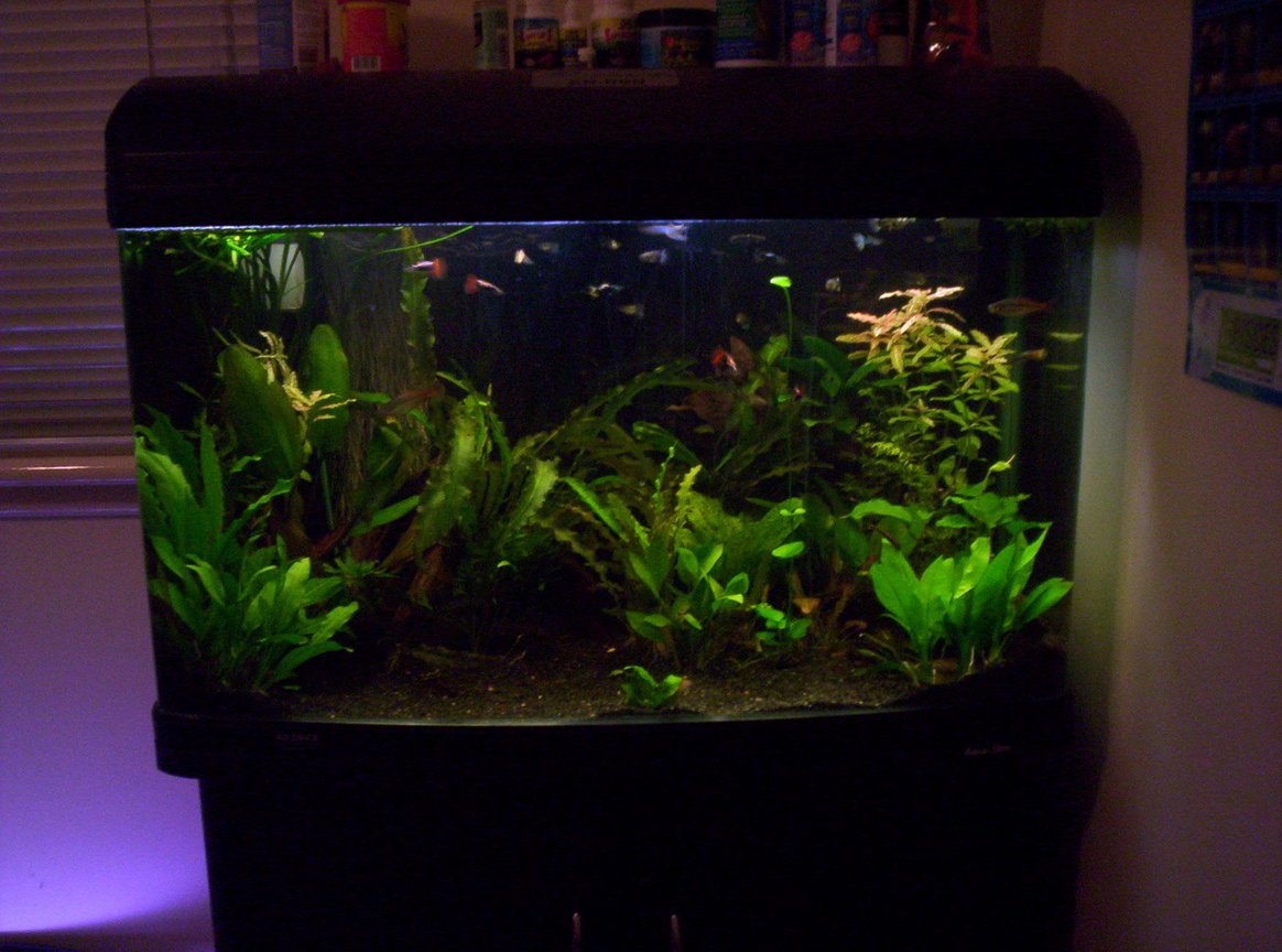 50 gallons planted tank (mostly live plants and fish) - just ordered a few new plants
