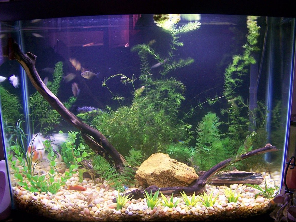 28 gallons planted tank (mostly live plants and fish) - Simple 28 Gallon Aquarium with live and artificial plants.