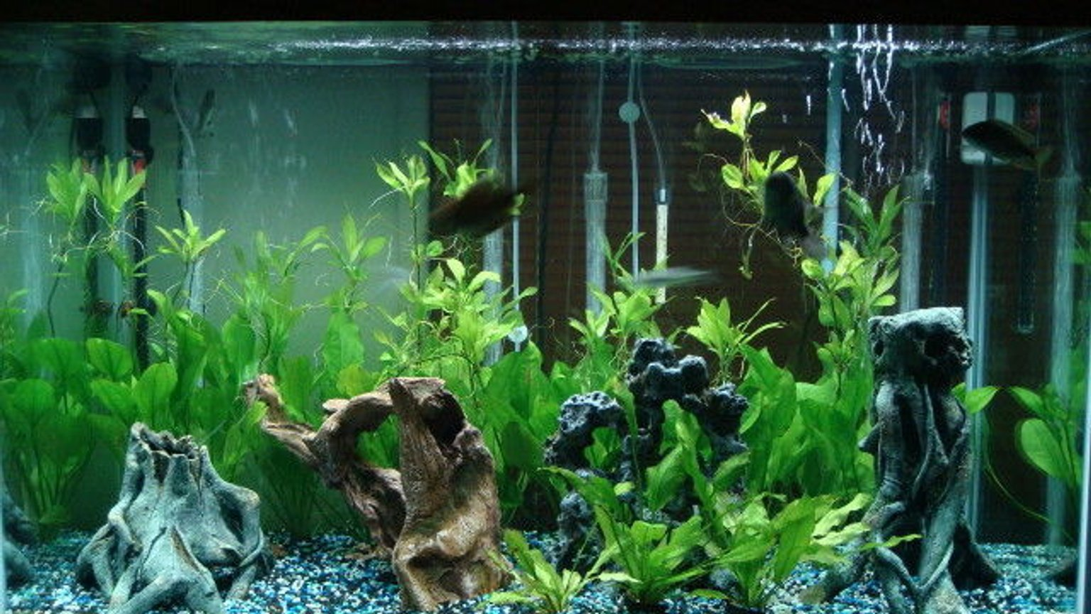 150 gallons planted tank (mostly live plants and fish) - my tank. 150gal