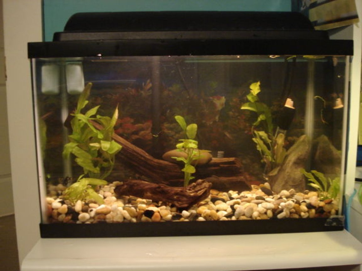 10 gallons planted tank (mostly live plants and fish) - 10 gallons