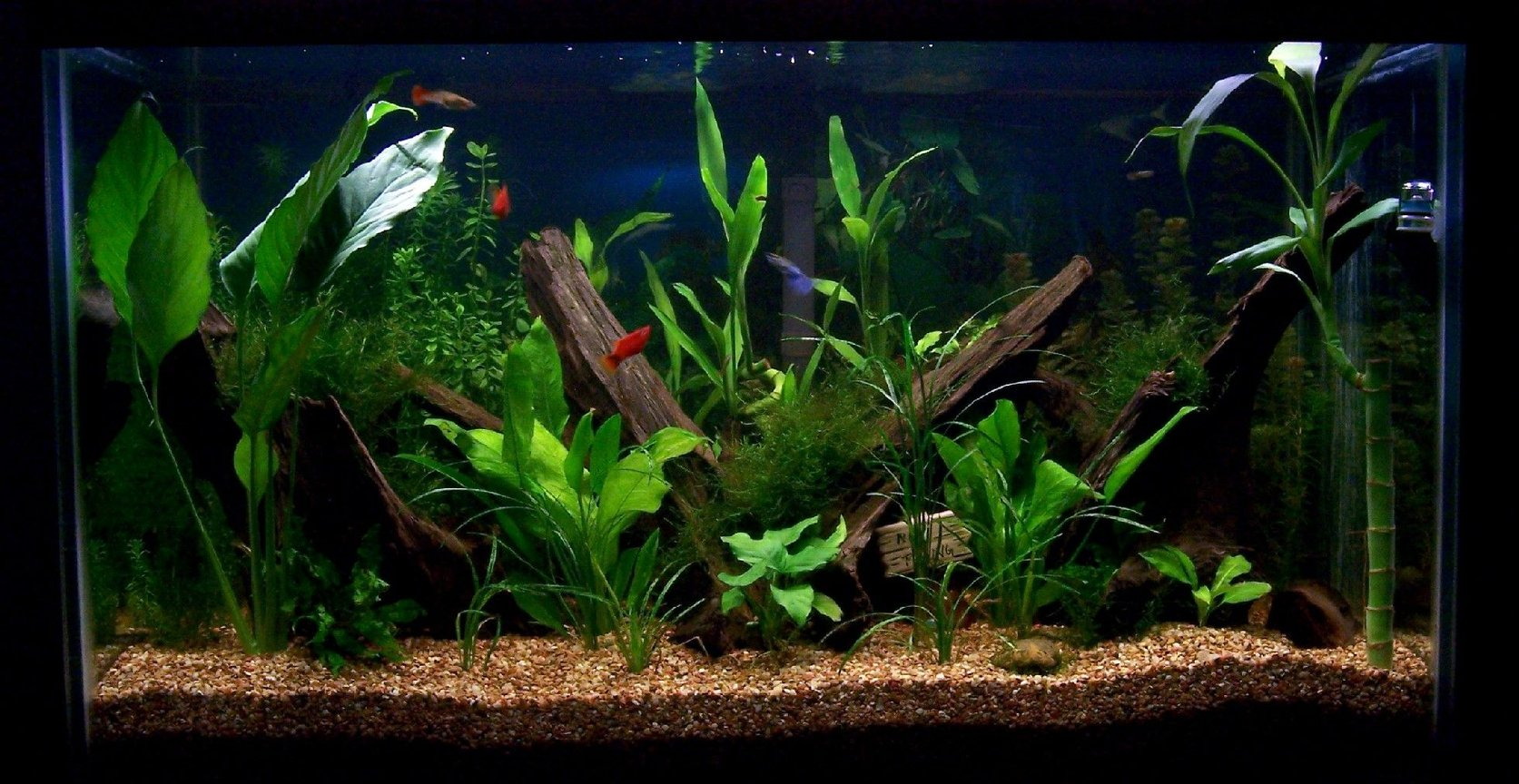 58 gallons planted tank (mostly live plants and fish) - 58 gallon planted aquarium