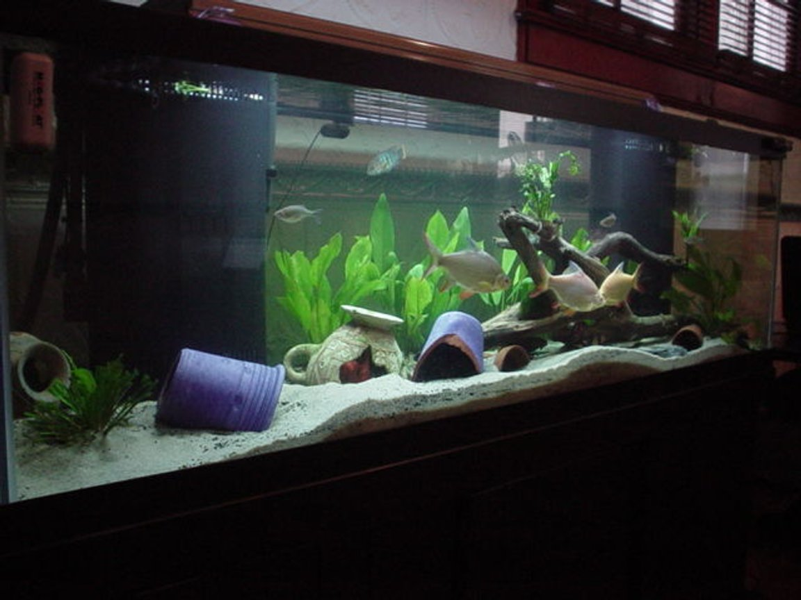 125 gallons planted tank (mostly live plants and fish)