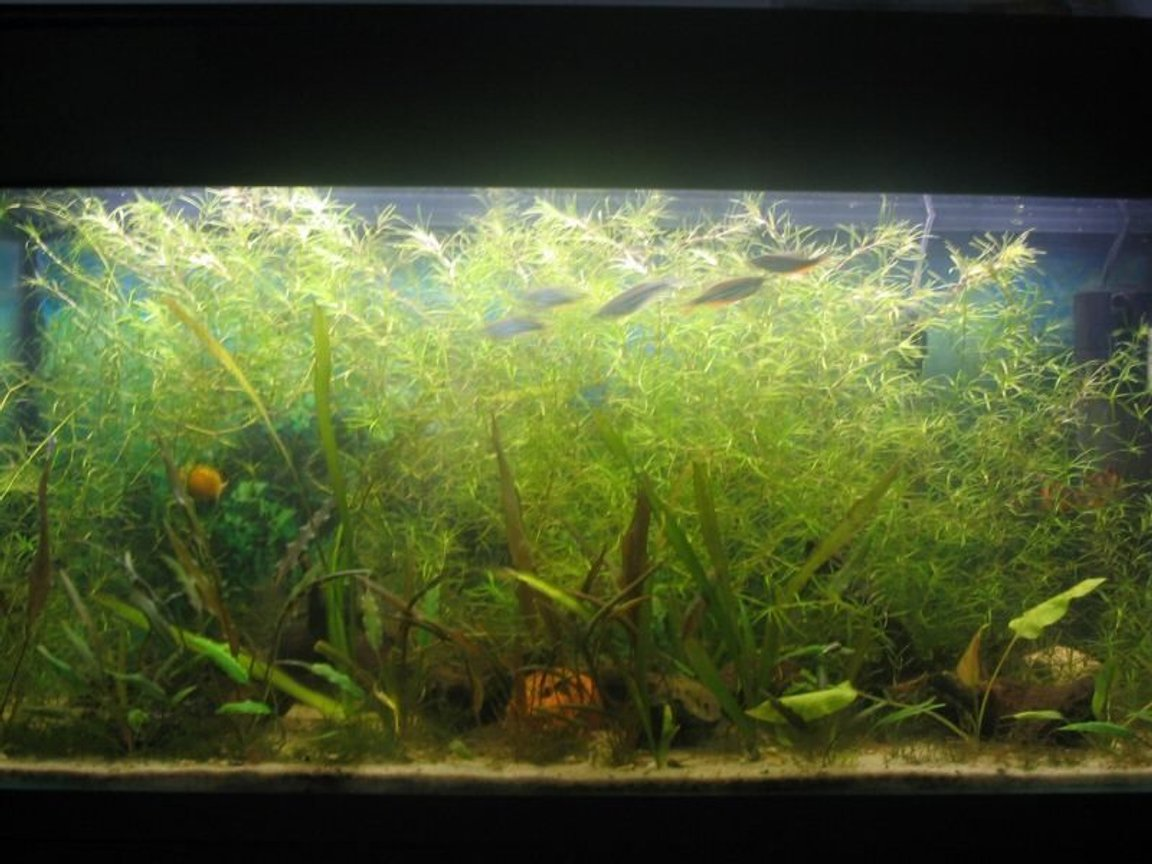 35 gallons planted tank (mostly live plants and fish) - 35g planted. 2wpg. plants; najas grass, crypts, java moss, vals, anubias..Plain sand as gravel. no Co2 and no ferts.. low maintainance tank overall.. With patience you get this.