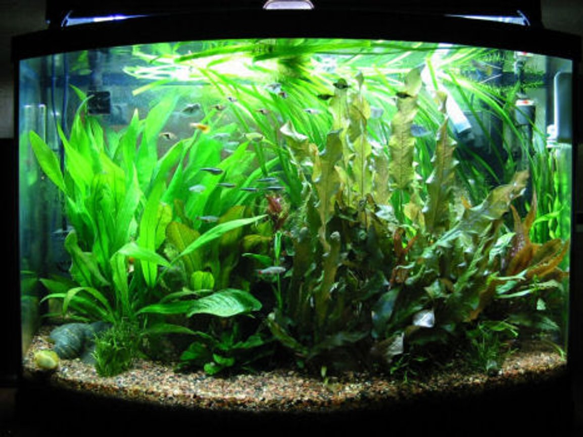 36 gallons planted tank (mostly live plants and fish) - 90 days old started on January 4 2008