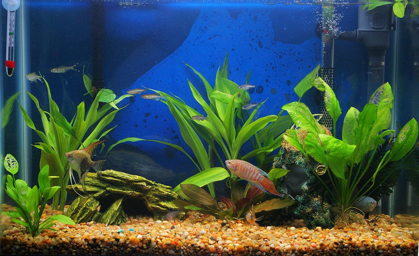 45 gallons planted tank (mostly live plants and fish) - My whole tank...