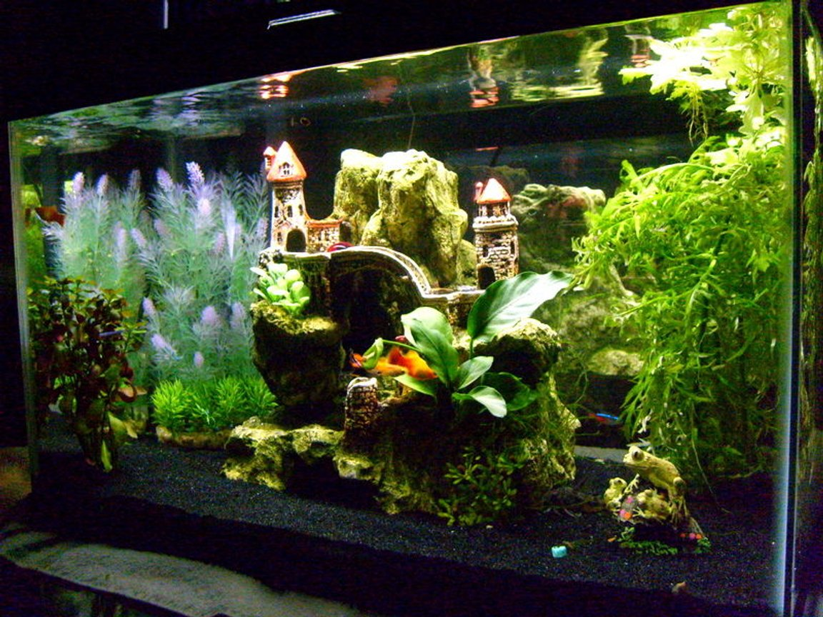 10 gallons planted tank (mostly live plants and fish) - ...