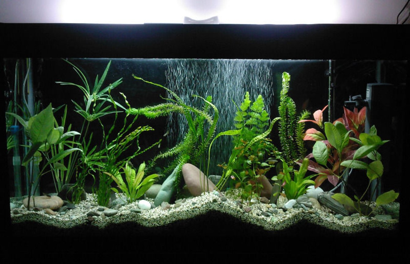 85 gallons planted tank (mostly live plants and fish) - 120*40*70 light: (PLL 36W)*2 other equipments are all chinese