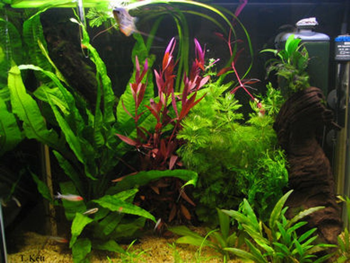 25 gallons planted tank (mostly live plants and fish) - My tank currently