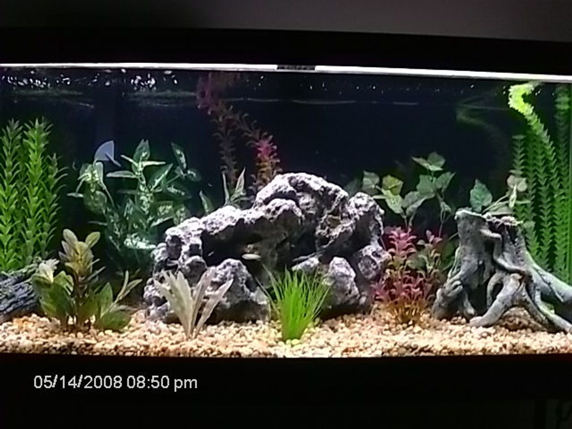 75 gallons planted tank (mostly live plants and fish) - 75 gallon African Chiclid tank