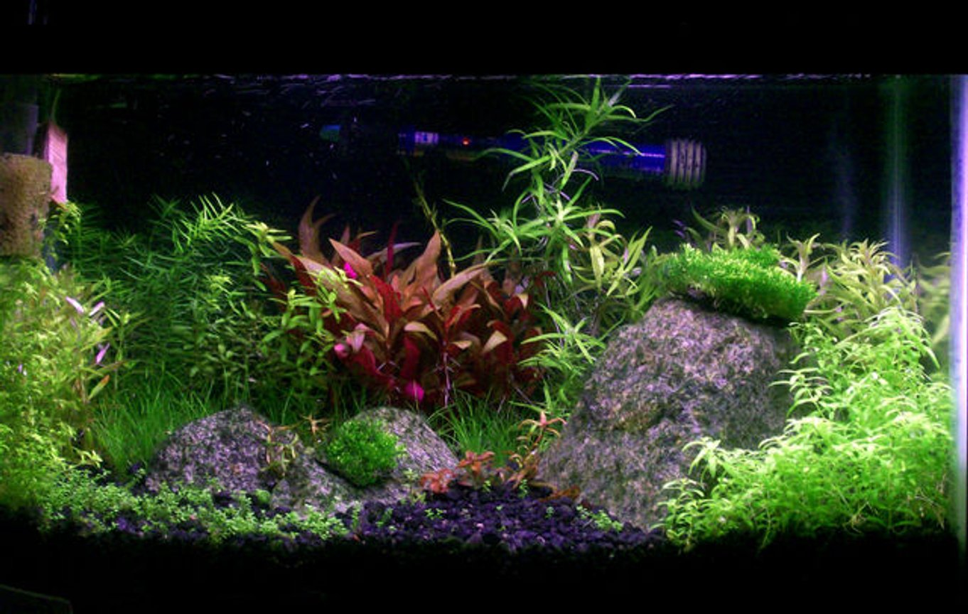 29 gallons planted tank (mostly live plants and fish) - 10g Planted